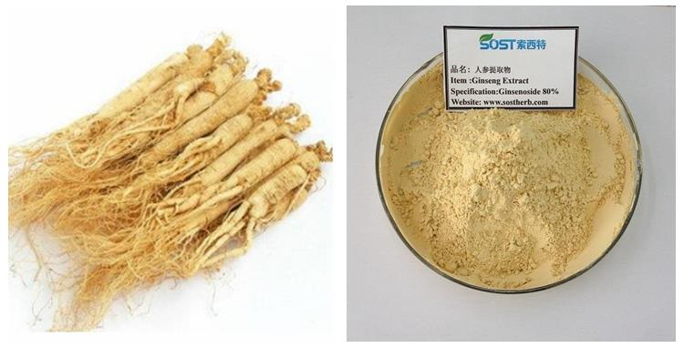 Source of Ginseng Extract