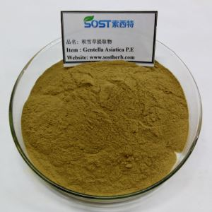 Centella Asiatica Extract Powder for Skin