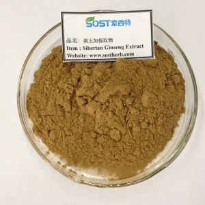 Siberian Ginseng Extract, Eleutheroside,Acanthopanax senticosus extract