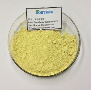 Organic Astragalus Extract Powder