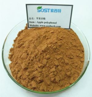 China Apple Extract,  Pure Apple Fruit Extract Powder, Wholesale Apple Extract Polyphenol
