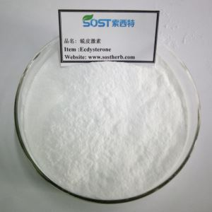Cyanotis Arachnoidea Extract, Natural beta Ecdysterone Powder