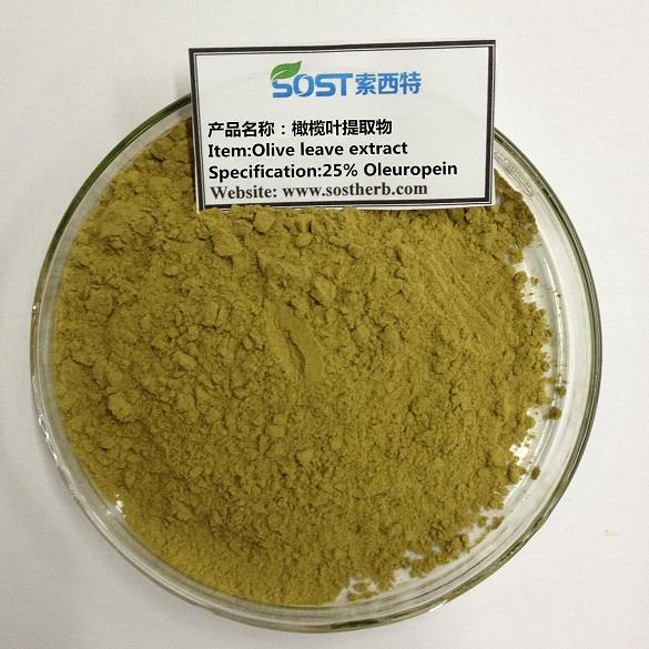 Olive Leaves Extract Powder,25% Oleuropein