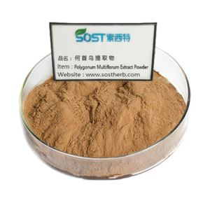Polygonum Multiflorum Extract Powder
